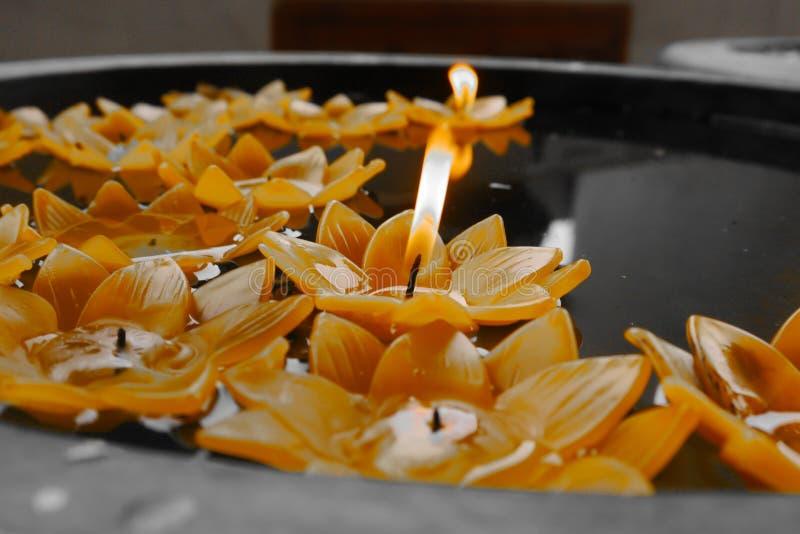 Gul stearinljus för lotusblommablomma i handfatet royaltyfri bild