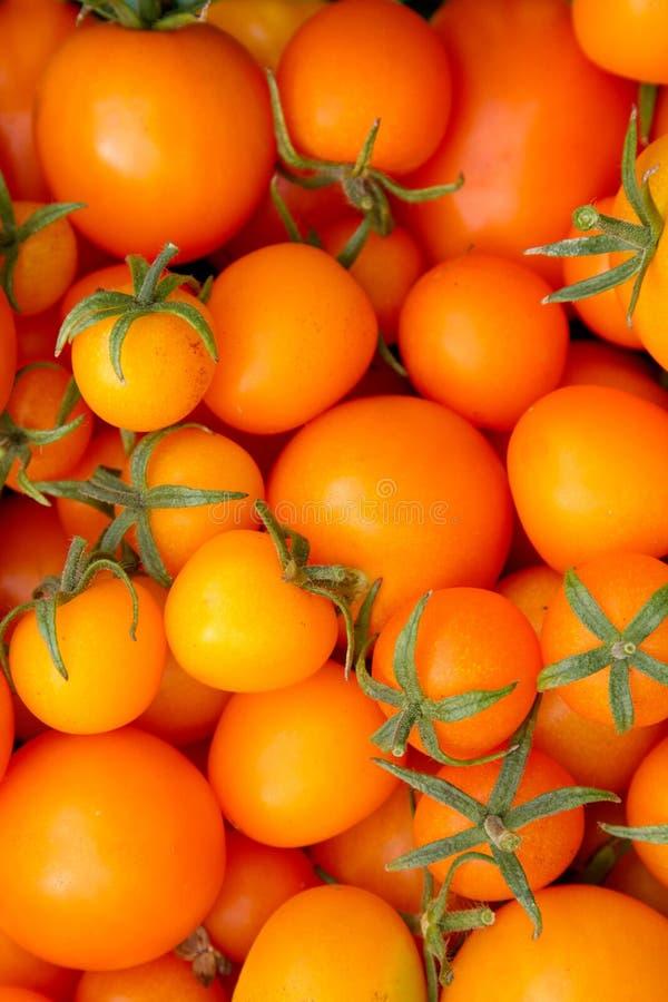 Gul tomatbakgrund fotografering för bildbyråer