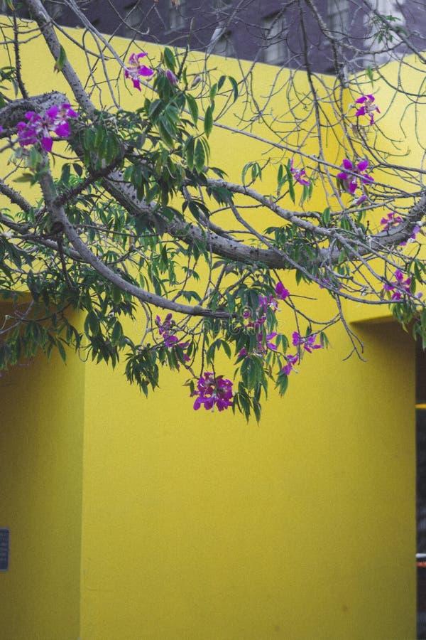 Gul vägg med trädet och blommor arkivbild
