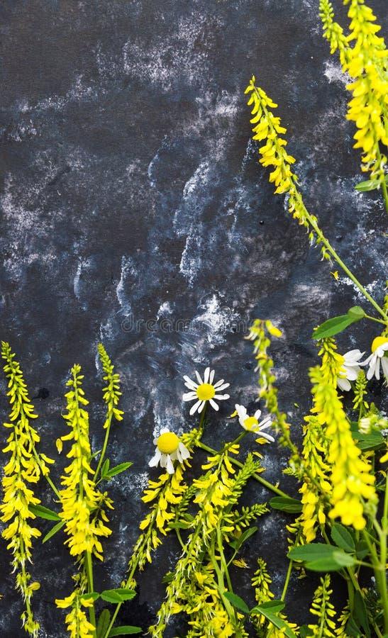 Gul vildblommaordning på svart bakgrund arkivfoto