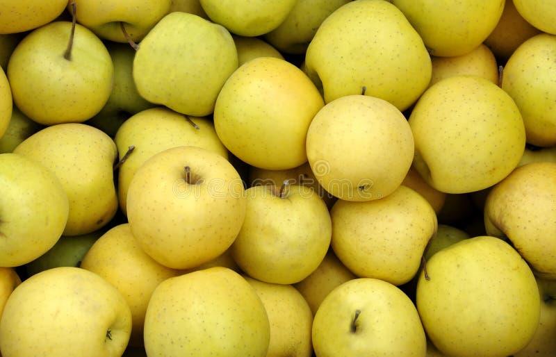 Gula äpplen royaltyfria bilder
