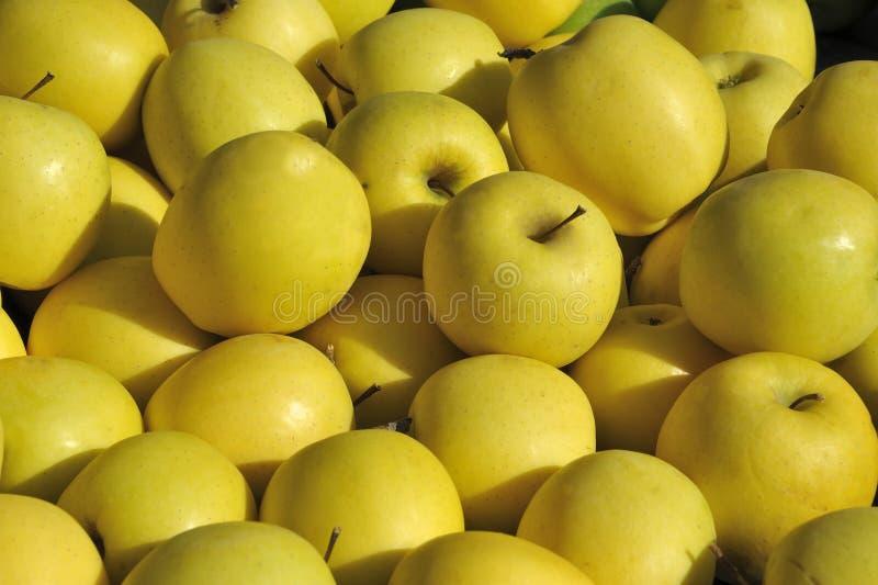 Gula äpplen fotografering för bildbyråer