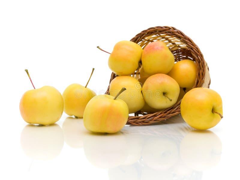Gula äpplen i en korg på en vit bakgrund royaltyfri fotografi