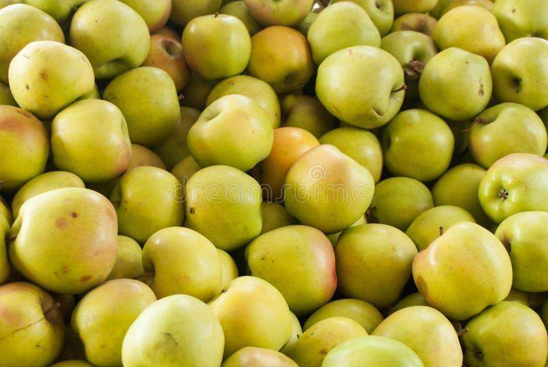 Gula äpplen på lantgårdställningen arkivbild