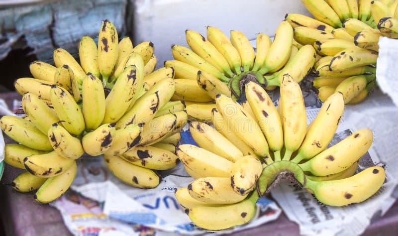 Gula bananer, musa acuminata royaltyfria foton