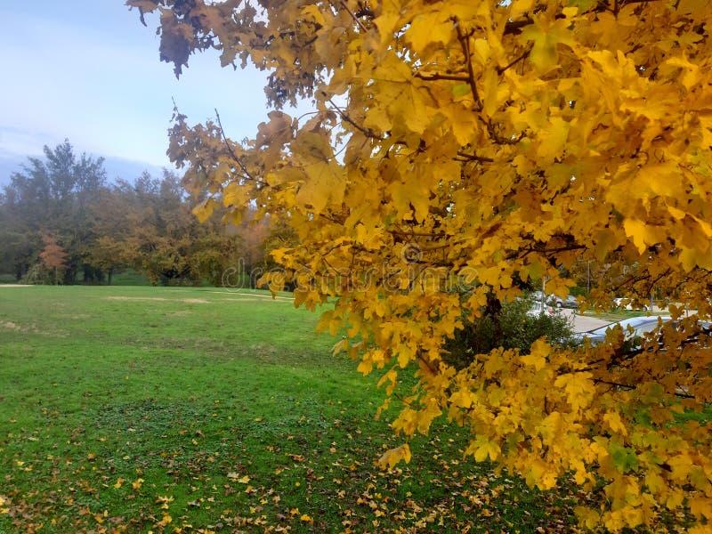 Gula blad och träd i offentliga parker i Lyon, Frankrike royaltyfria foton