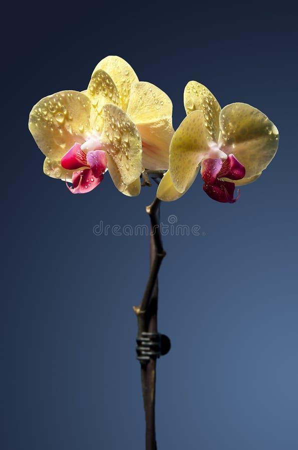 Gula blommor   royaltyfri bild