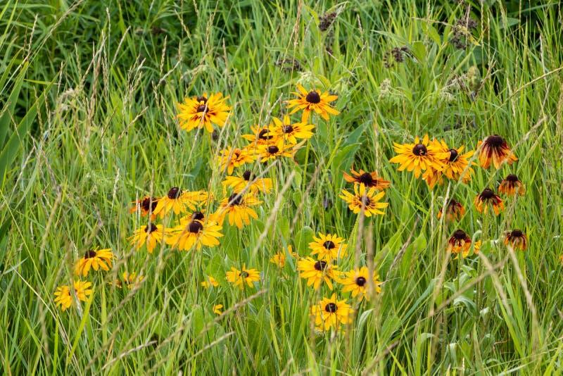 Gula blommor i gräset i parkerar royaltyfria bilder