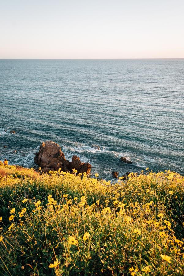 Gula blommor och stenig kust i Corona del Mar, Newport strand, Kalifornien arkivbilder