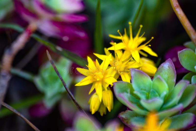 Gula blommor omgav omkring med gräsplan royaltyfria bilder