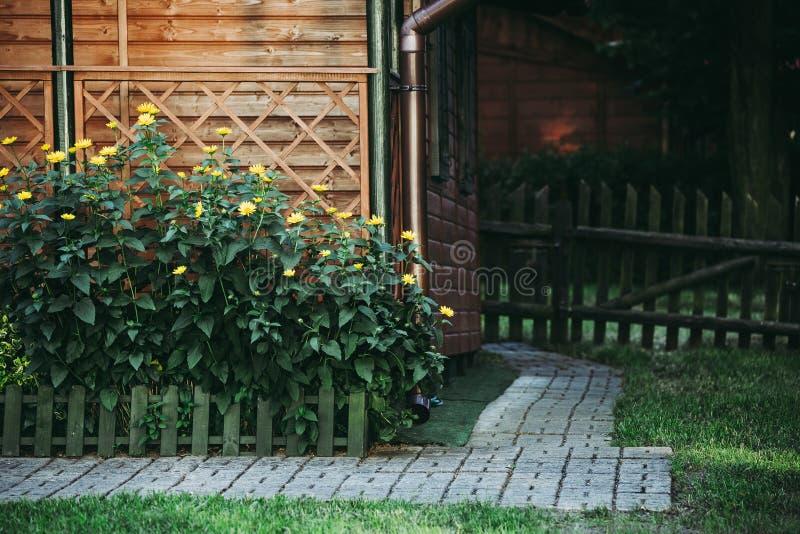 Gula blommor på blomsterrabatt i trädgård arkivbilder