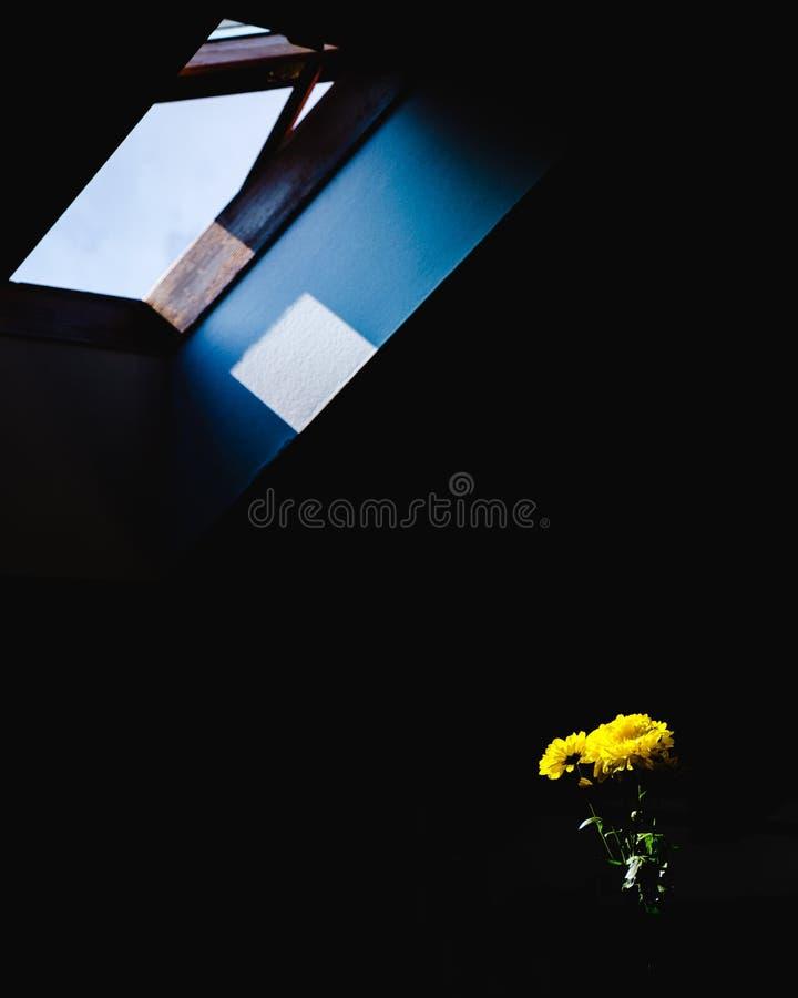 Gula blommor på en tabell exponerad av solljuset som kommer till och med ett öppet fönster royaltyfria foton