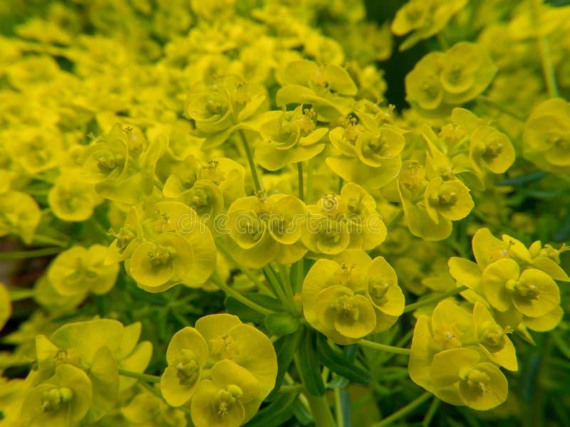 Gula blommor på grön bakgrund av blå himmel royaltyfri bild