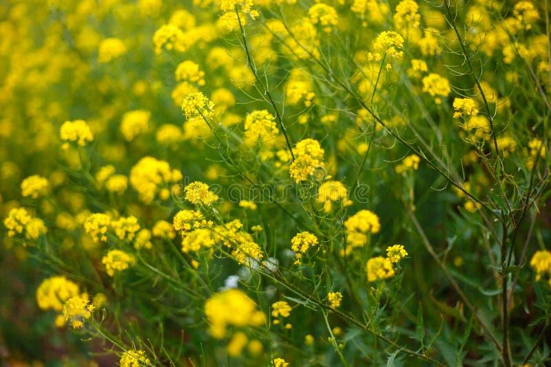 Gula blommor på gröna växter royaltyfri bild