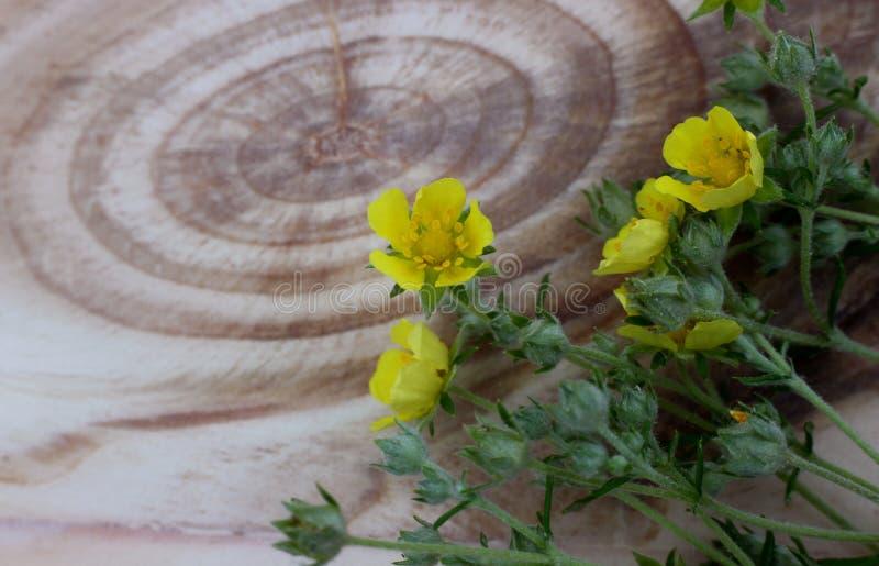 Gula blommor på träbräde med den härliga strukturen royaltyfri foto