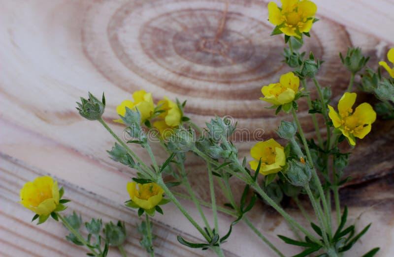 Gula blommor på träbräde med den härliga strukturen arkivfoto
