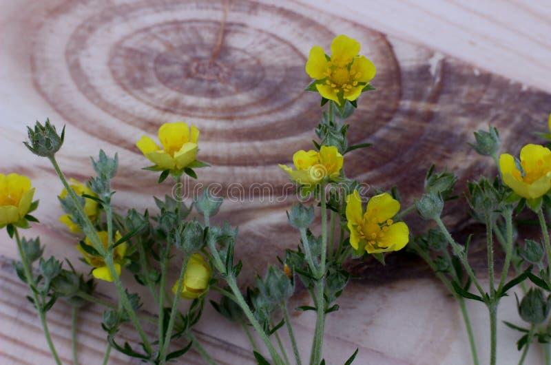 Gula blommor på träbräde med den härliga strukturen royaltyfria bilder