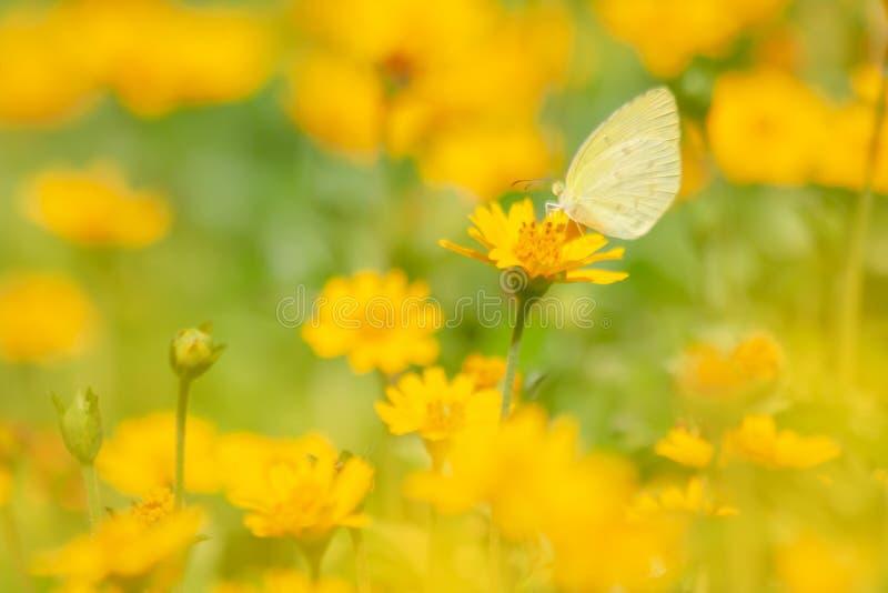 Gula blommor som blommar med fjärilen royaltyfri bild