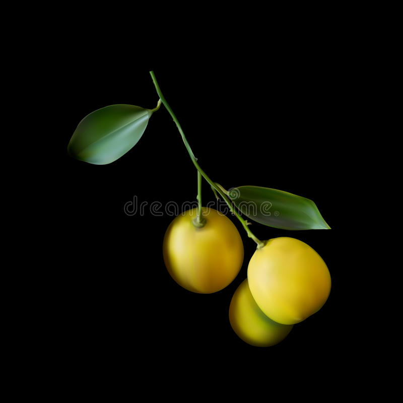 Gula citroner med filialen på svart bakgrund stock illustrationer