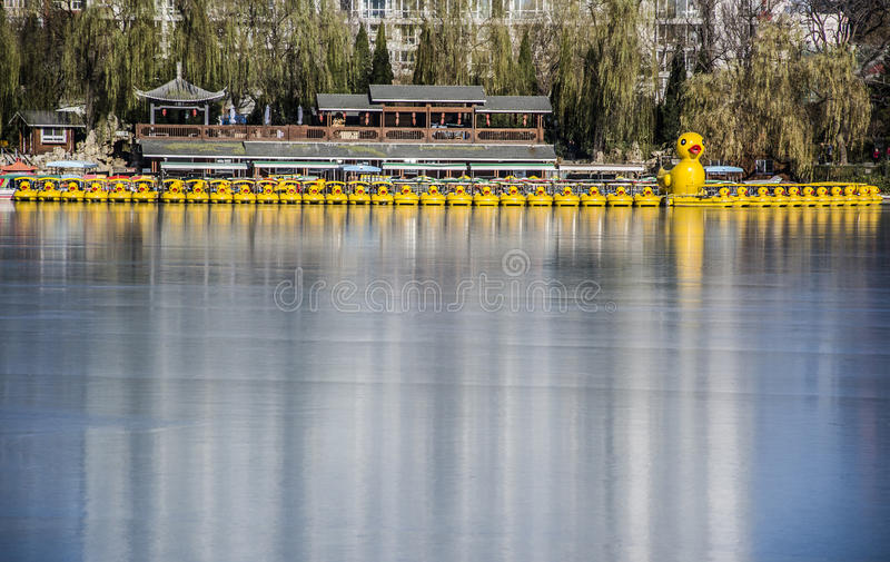Gula Duck Boats, Peking royaltyfri foto