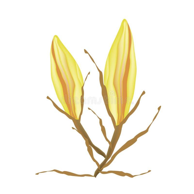 Gula Equiphyllum blommar på en vit bakgrund stock illustrationer