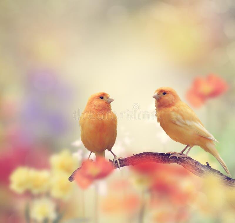 Gula fåglar i trädgården royaltyfri foto