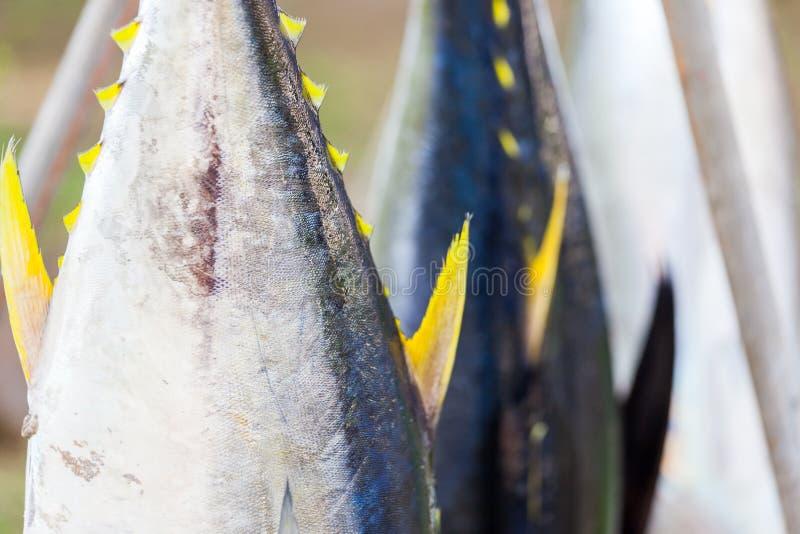 Gula fenatonfiskar som är utsatta på försäljning från fiskare royaltyfria foton
