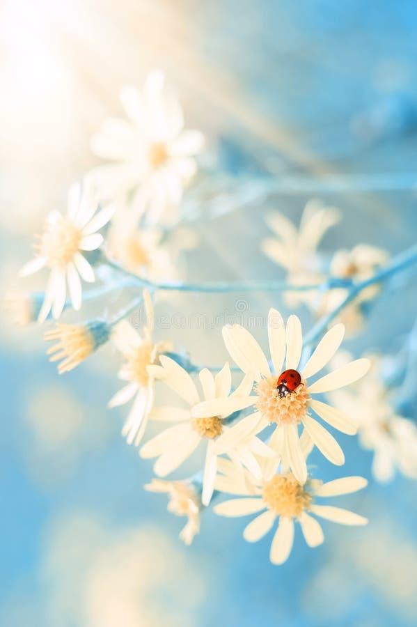 Gula höstblommor och en nyckelpiga på en härlig blå bakgrund Romantisk drömlik bild Selektivt fokusera arkivfoton