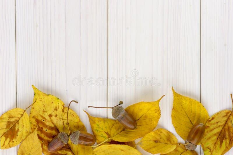 Gula höstsidor och ekollon på en vit trätabell arkivbild
