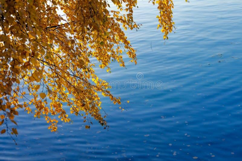 Gula höstsidor på björkfilialer över den blåa floden i nedgång arkivfoton