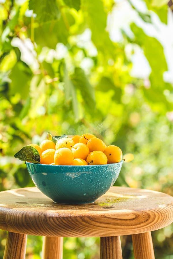 Gula körsbärsröda plommoner med vattendroppar i blå bunke royaltyfri bild