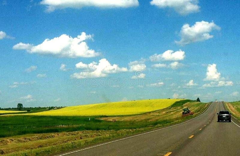 Gula kullar i North Dakota royaltyfri bild