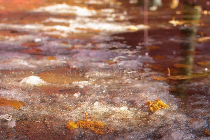 Gula lönnlöv i pölen och snön på en kullersten med ett solsken Litet djup av sätter in arkivfoto