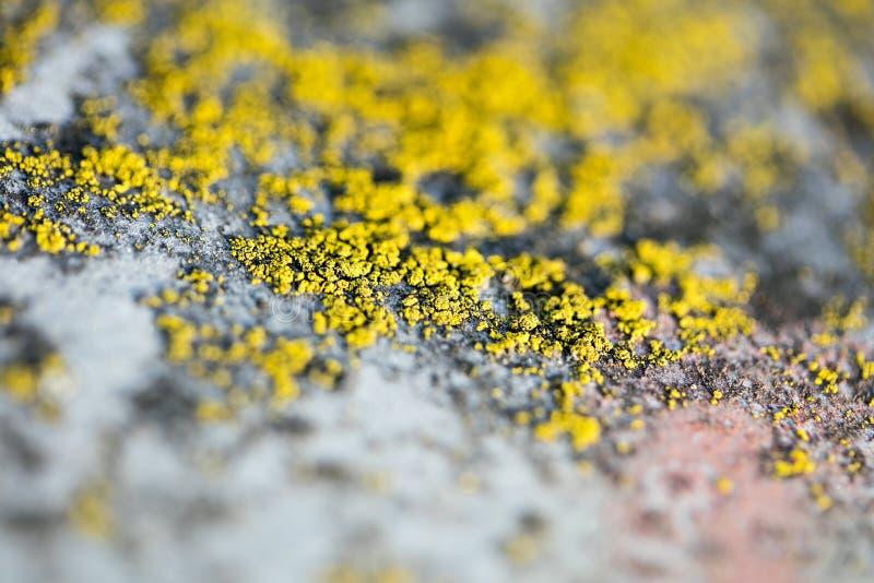 Gula laver på konst för bakgrund för makro för metallyttersida i högkvalitativa tryckprodukter femtio megapixels royaltyfri fotografi