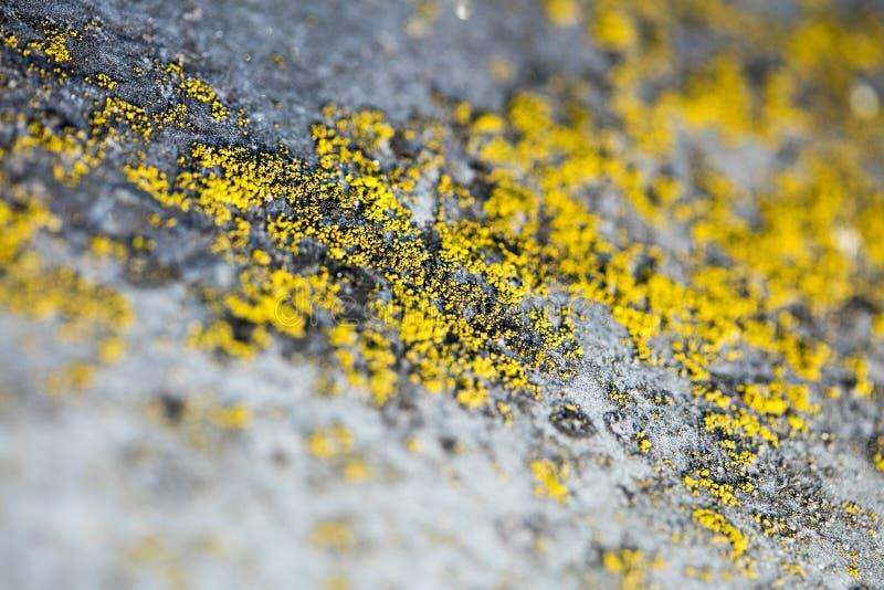 Gula laver på konst för bakgrund för makro för metallyttersida i högkvalitativa tryckprodukter femtio megapixels royaltyfria foton