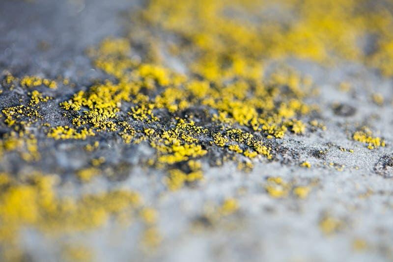 Gula laver på konst för bakgrund för makro för metallyttersida i högkvalitativa tryckprodukter femtio megapixels fotografering för bildbyråer