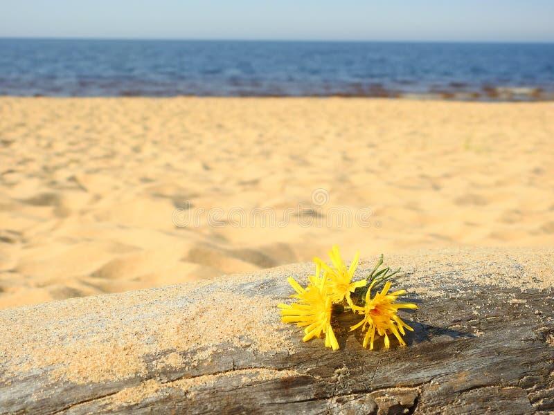 Gula lilla blommor royaltyfri fotografi