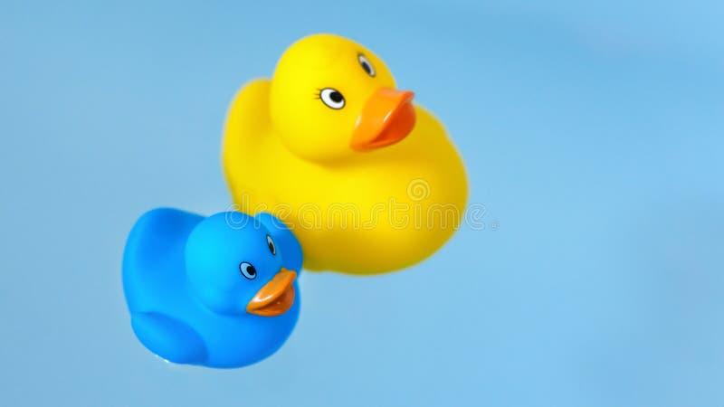 Gula och blåa gummibadänder i vatten royaltyfria bilder