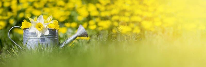 Gula och vita blommor i bevattna kan arkivbilder