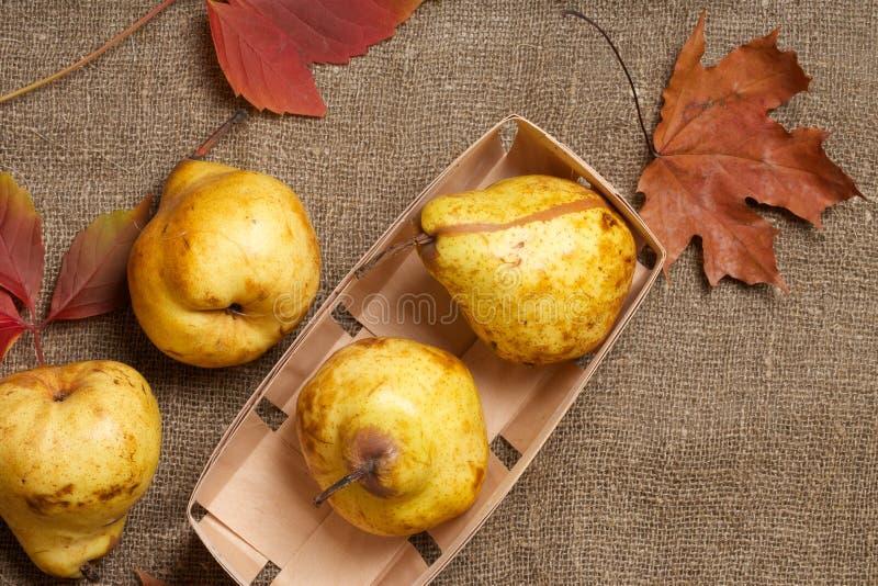 Gula päron på en säckväv royaltyfri bild