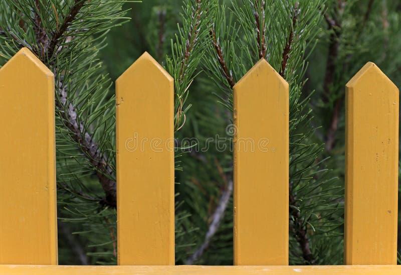 Gula posteringar av ett trädgårdstaket och coniferevisare som bakgrund royaltyfria foton