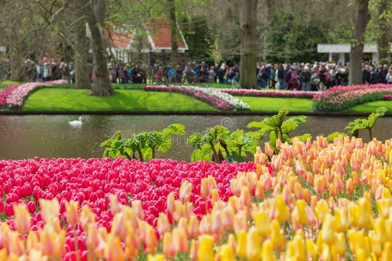 Gula, röda och rosa tulpan i en Keukenhof parkerar, suddiga turister i bakgrunden Selektivt fokusera royaltyfri foto