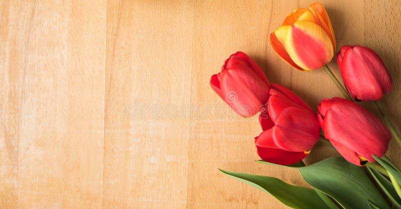 Gula röda tulpan på en wood bakgrund royaltyfri foto
