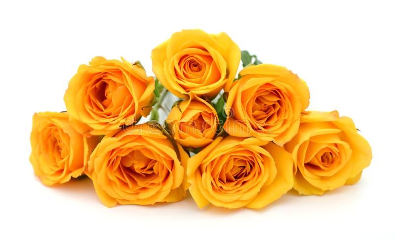 Gula rosor i vit bakgrund royaltyfri bild