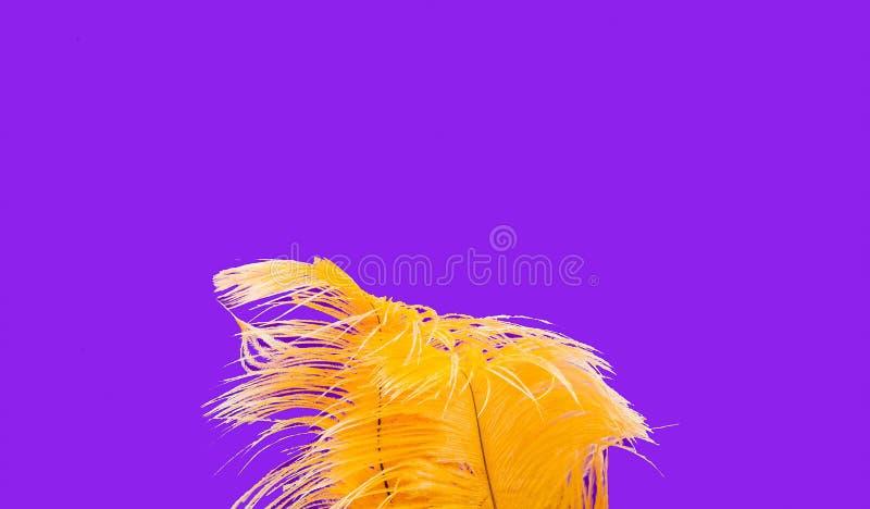 Gula strutsfjädrar på purpurfärgad bakgrund Festlig bakgrund för packe och projekt arkivbilder