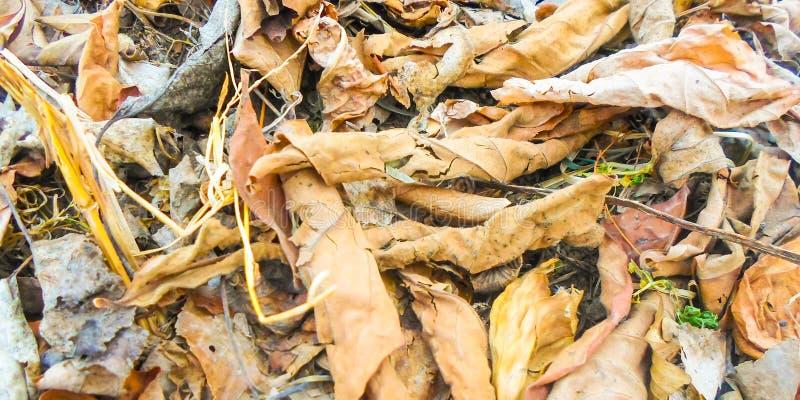 Gula torra sidor för bakgrund på jordningen i höst fotografering för bildbyråer