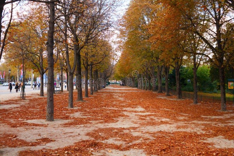 Gula träd i höst i parkerar av Paris royaltyfri fotografi