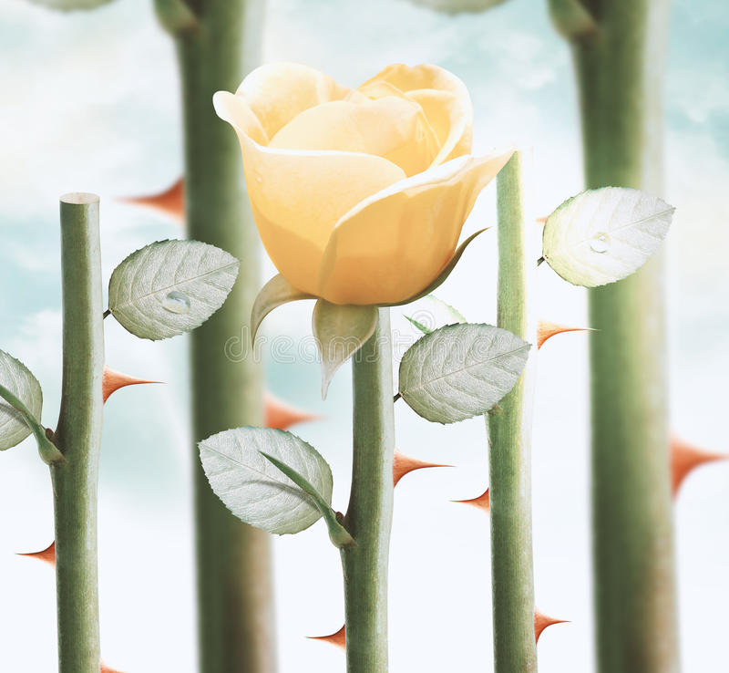 Gula trädgårds- rosor arkivfoton
