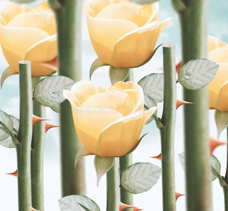 Gula trädgårds- rosor royaltyfri bild