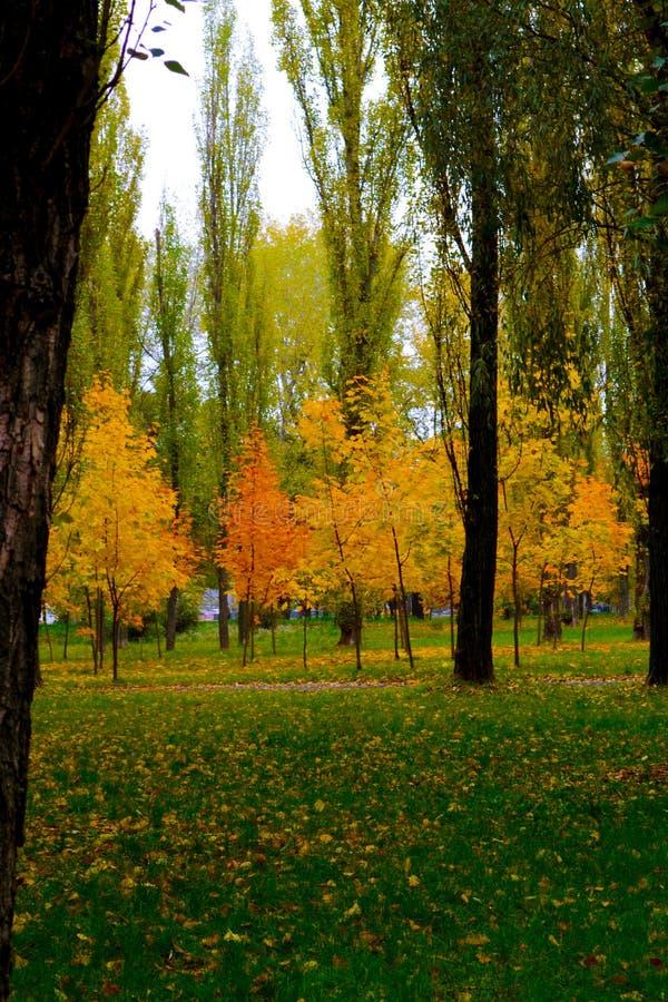 Gula Trees royaltyfri foto